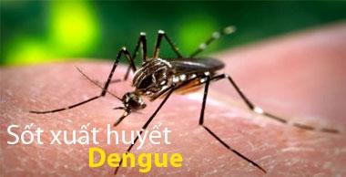 Hướng dẫn chẩn đoán, điều trị sốt Dengue và sốt xuất huyết Dengue