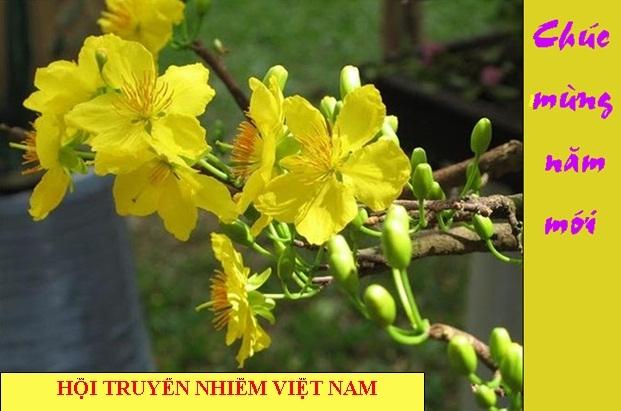 Lời chúc tết của chủ tịch Hội truyền nhiễm Việt Nam nhân dịp xuân Quý Tỵ 2013