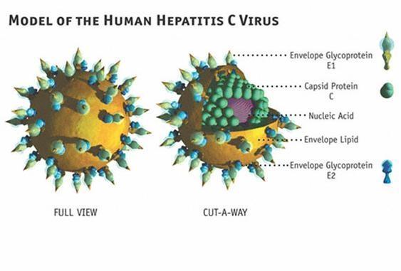 Bệnh viêm gan C là gì