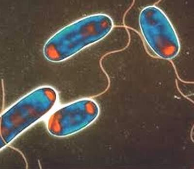 Phát hiện vi rút mới trong ruột có thể  giúp làm suy yếu các vi khuẩn gây hại