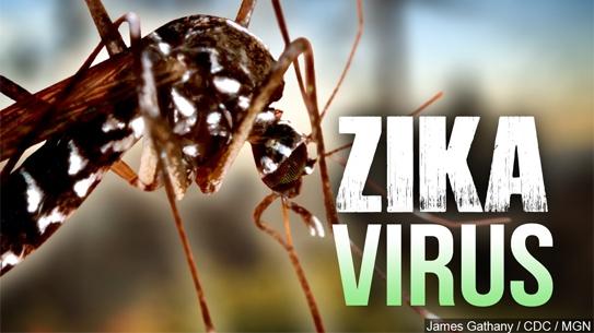 Ước tính sẽ có 4 triệu người khu vực châu Mỹ nhiễm vi rút Zika